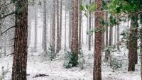 Napłynie powietrze arktyczne i poprószy śnieg. Weekend pochmurny z aurą przedzimową