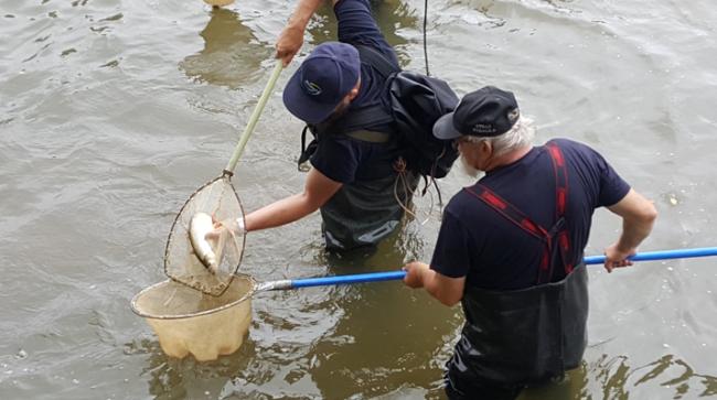 Wody Polskie odłowią ryby