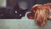 Dofinansowanie na sterylizację psów i kotów oraz bezpłatne czipowanie psów