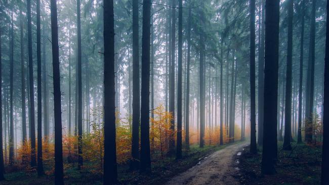 W piątek aż 22°C. Weekend kontynuacją złotej jesieni, ale noce i poranki z gęstymi mgłami