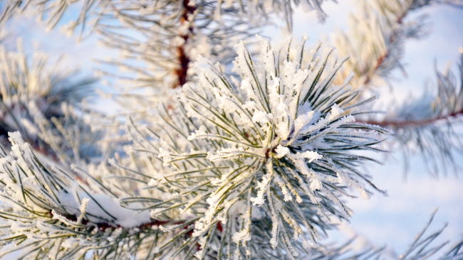 Boże Narodzenie pochmurne. Wigilijny wieczór z lekkim mrozem, więcej śniegu w pierwszy dzień Świąt