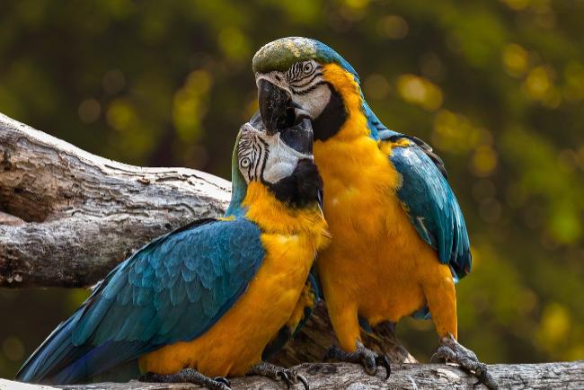 Hodowla ptaka w domu - co powinieneś wiedzieć?