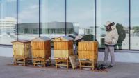 VIVO! Krosno rozpoczęło sezon pszczelarski