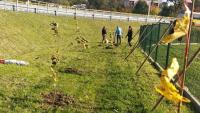 """50 nowych sadzonek drzew i krzewów wokół """"Psiego Parku"""""""
