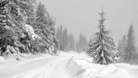 Początek tygodnia z intensywnymi opadami śniegu. Całodobowo trzymać będzie lekki mróz