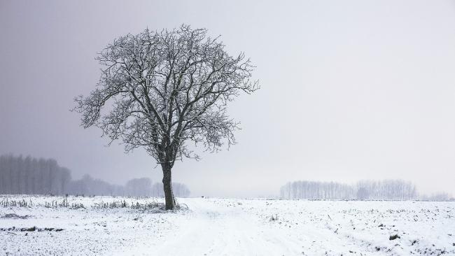 W środku tygodnia będzie biało, popada śnieg. W czwartek przez cały dzień lekki mróz
