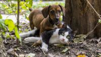 Miasto dopłaci połowę za zabieg sterylizacji psa i kota