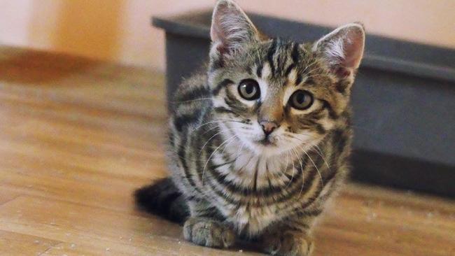 KROSNO: kilkadziesiąt kotów czeka na adopcję. Zobacz zdjęcia