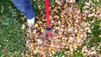 Jesienne porządki w ogrodach. Miasto odbierze zielone odpady