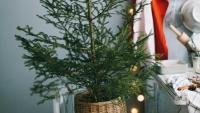 Zamienią świąteczne choinki na energię. Trwa zbiórka zielonych drzewek